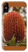 Banksia Serrata 2 IPhone Case