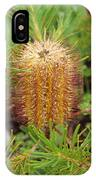 Banksia Spinulosa IPhone Case
