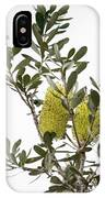 Banksia Syd02 IPhone Case