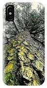 Bark Up The Tall Pine Tree Abstract In Felicina  Louisiana IPhone Case