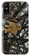 Barn Owl In A Tree IPhone Case
