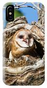 Barn Owl Owlet Says Hello To The World IPhone Case