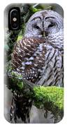 Barred Owl In Tree IPhone Case