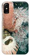 Barrell Sponges And Sea Fans IPhone Case
