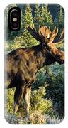 Basking In The Morning Sun IPhone Case