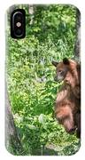 Bear Cub Climb IPhone Case