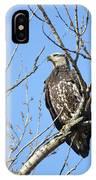 Beautiful Juvenile Eagle IPhone Case