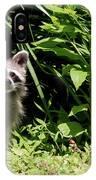 Beautiful Racoon IPhone Case