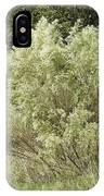 Beautiful Tree At Autumn  IPhone Case