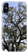 Beautiful Tree Blue Sky Sunshine IPhone Case