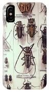 Beetles IPhone Case