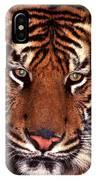 Bengal Tiger - 2 IPhone Case