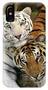 Bengal Tigers At Play IPhone Case