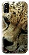 Big Cats 50 IPhone Case