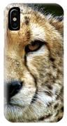 Big Cats 51 IPhone Case