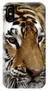 Big Cats 78 IPhone Case