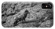 Bighorn Sheep Ewe On Wolf Creek Pass IPhone Case