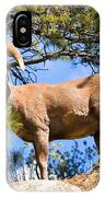 Bighorn Sheep In The San Isabel National Forest IPhone Case
