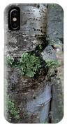 Birch Bark 1 IPhone Case