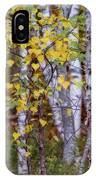 Birch In Autumn IPhone Case