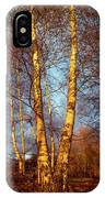 Birch Tree In Golden Hour IPhone Case