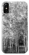 Birch Trees1 IPhone Case