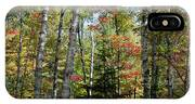 Birches In Fall Forest IPhone X Case