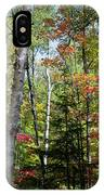 Birches In Fall Forest IPhone Case