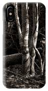 Birches In The Wood IPhone Case