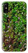 Birdsfoot Trefoil Surrounded By Tiny Bright Eyes In Campground In Saginaw-minnesota IPhone Case
