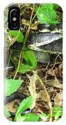 Black Rat Snake IPhone Case