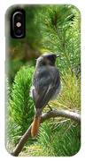 Black Redstart IPhone Case