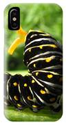 Black Swallowtail Caterpillar IPhone Case