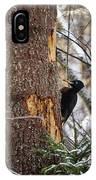 Black Woodpecker Peek IPhone Case