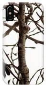 Blackbird In A Tree IPhone Case