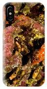 Blacktip Grouper Epinephelus Fasciatus IPhone Case