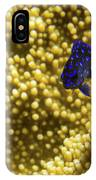 Blue Fish In Coral IPhone Case