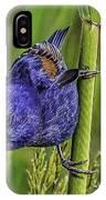 Blue Grosbeak On A Reed IPhone Case
