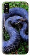 Blue Hognose IPhone Case
