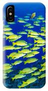 Blue Stripe Snapper IPhone Case