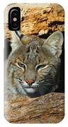 Bobcat Hiding In A Log IPhone Case