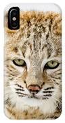 Bobcat Stare IPhone Case