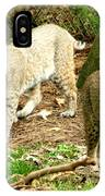 Bobcats Begin To Hunt IPhone Case
