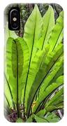 Bold Fronds 8 IPhone Case