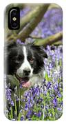 Border Collie In Bluebells Uk IPhone Case