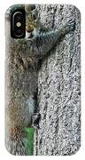 Boston Common Squirrel Hanging From A Tree Boston Ma IPhone Case