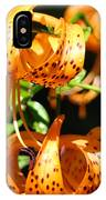 Botanical Art Prints Orange Tiger Lilies Master Gardener Baslee Troutman IPhone Case