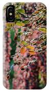 Branches Of A Tree With Colorful Leaves Shining In The Sunlight IPhone Case