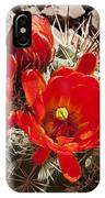 Bright Orange Cactus Blossoms IPhone Case