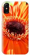 Bright Orange Gerbera  IPhone Case
